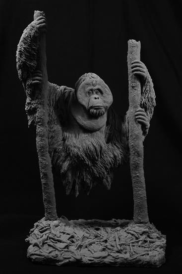 紅毛猩猩 /藝術家:李子奇