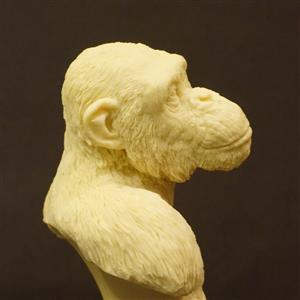 黑猩猩雕塑胸像 【Top realism GK】 造物藝術創作 sculpture